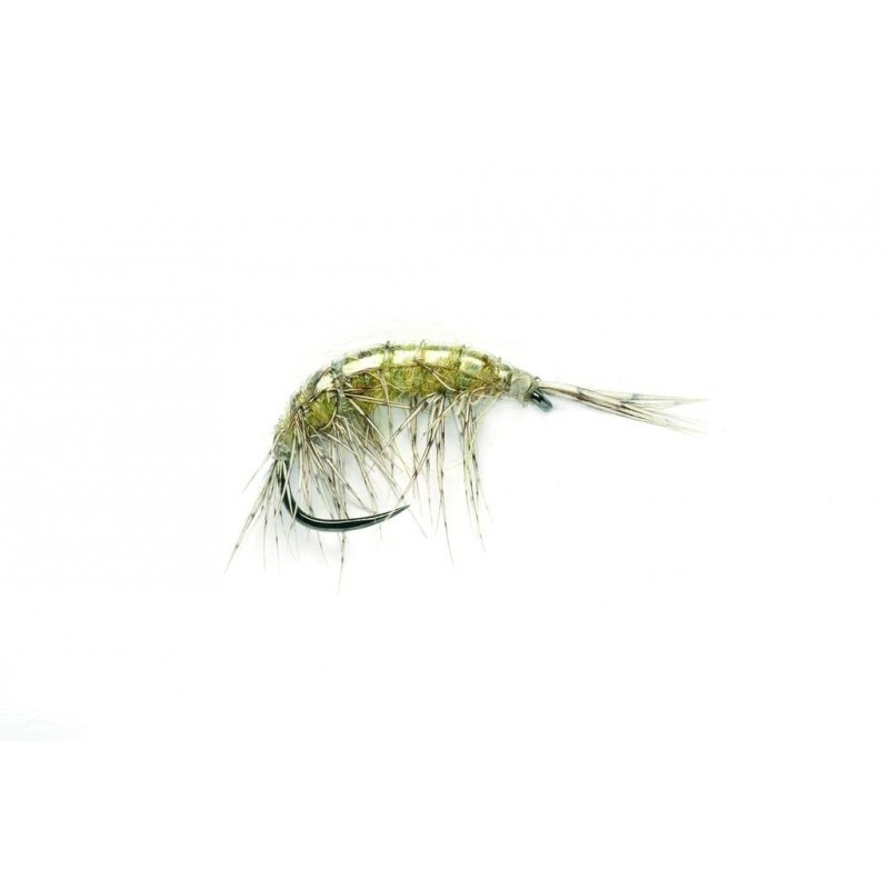 Gammare Freshwater shrimp sans ardillon