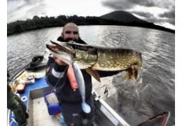Gros shad et montage shallow, le top pour la pêche du brochet